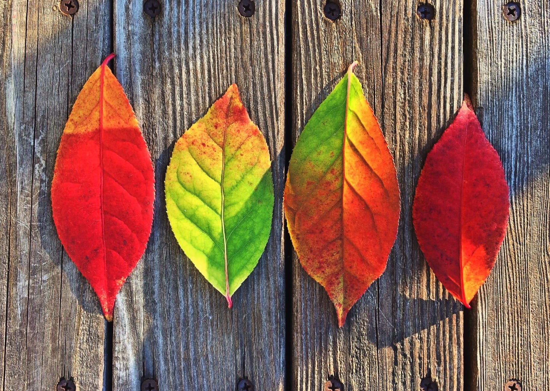leaves fall colors rainbow